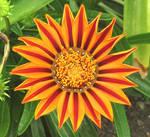 Pretty flower 1 by Sia-Mon