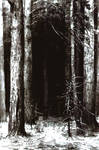 Mirkwood drawing on paper white and black ink