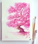 Cherryblossom bonsai