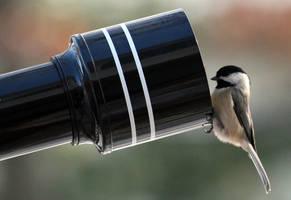 Home Birds 25 by Doumanis