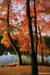 Lake Topanemys 5
