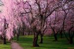 Pink 472