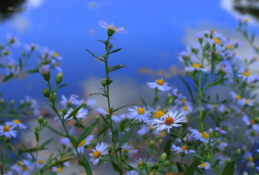 Wild Flowers 020