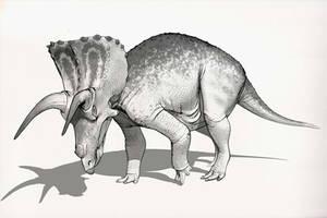 Draw Dinovember Day 21 Triceratops by daitengu