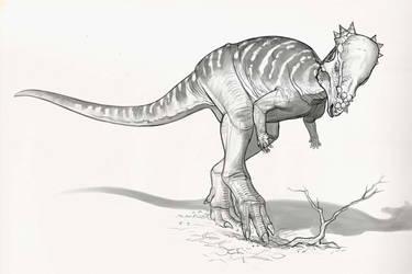 Draw Dinovember Day 25 Pachycephalosaurus