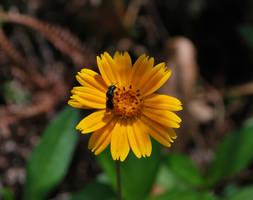 Flower by anjosarda