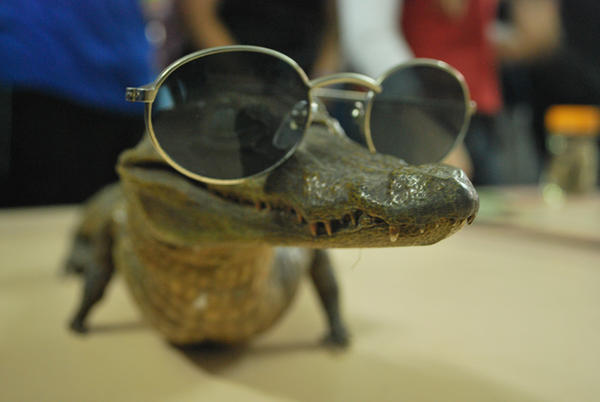 Alligator by anjosarda