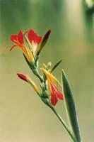 Fallen Flower by anjosarda