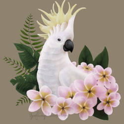 Sulphur Crested Cockatoo by YardFlamingo
