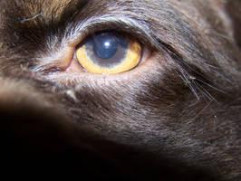 Teddy's Eye by Kitsufox