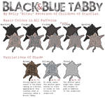 Black and Blue Tabby