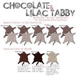 Chocolate and Lilac Tabby