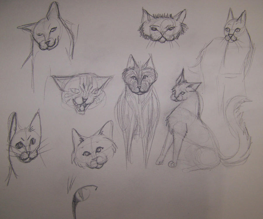 Cat Sketches by Kitsufox