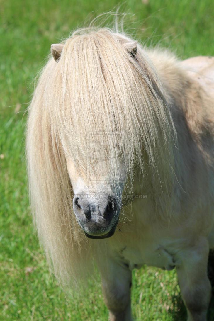 Spirit - Mini Horse by Kitsufox