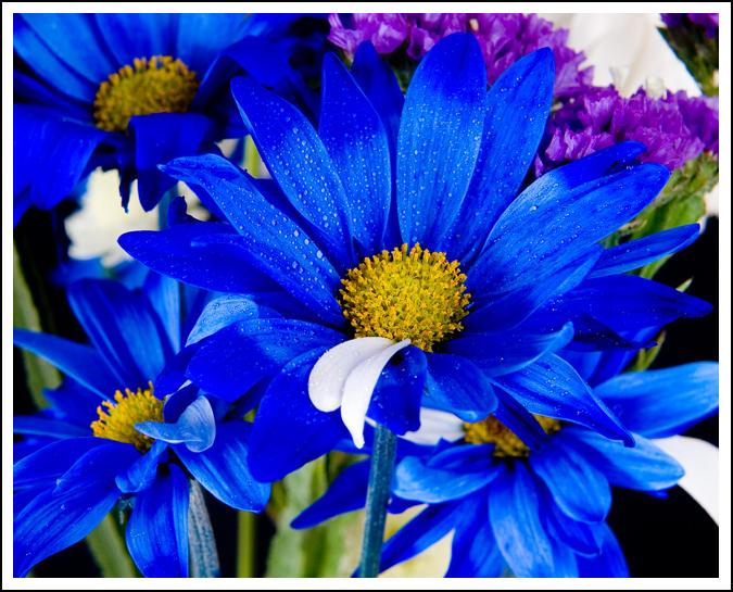 Flowers by tsaraleksi