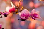 Flowers, from below