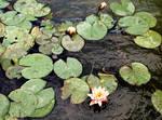 Photo- Chicago Botanic Garden