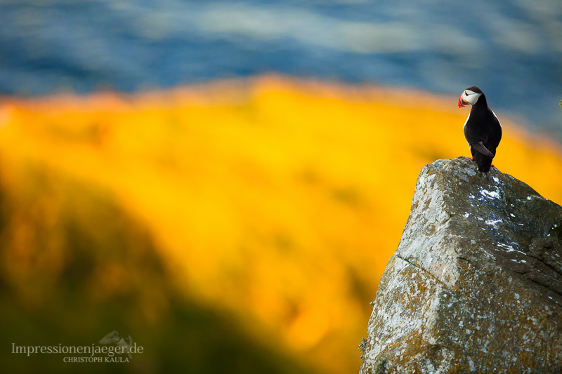 Puffin lookout by chriskaula