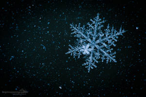Snowflake by chriskaula
