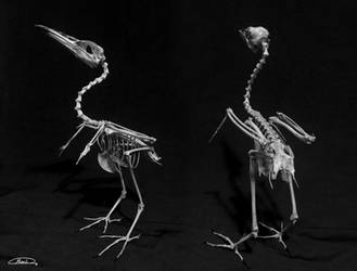 Heron by maskman626