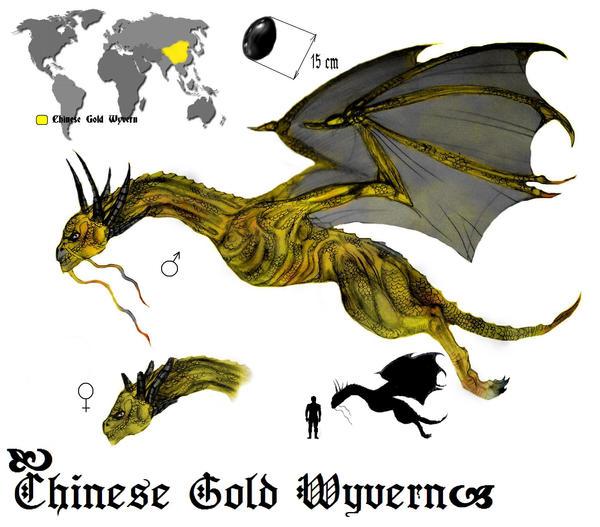 Wyvern - Chinese Gold Wyvern by VSamaraV on DeviantArt
