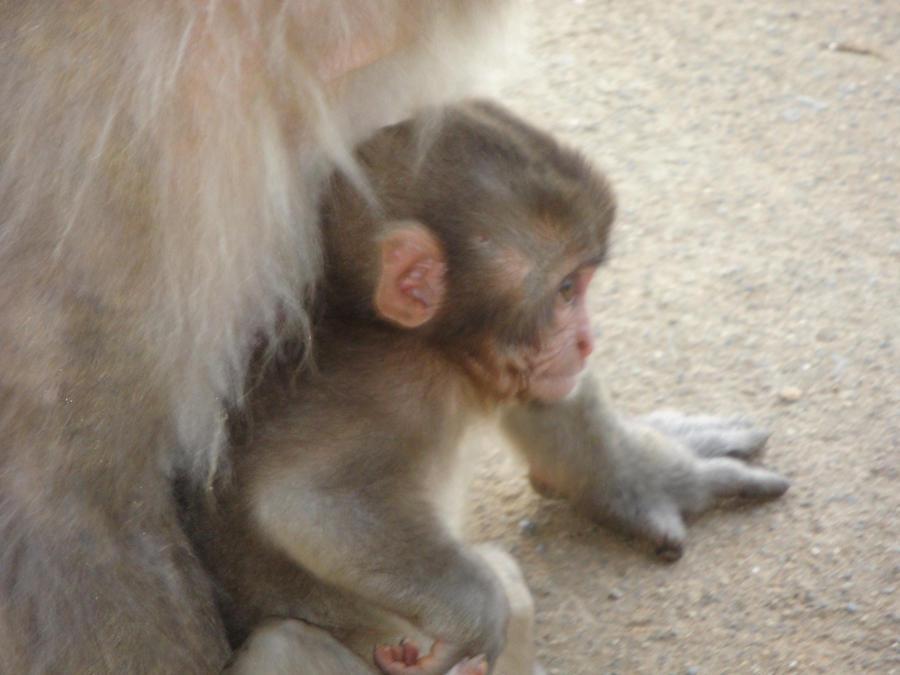 Cute Little Baby Monkeys What a Cute Little Baby Monkey