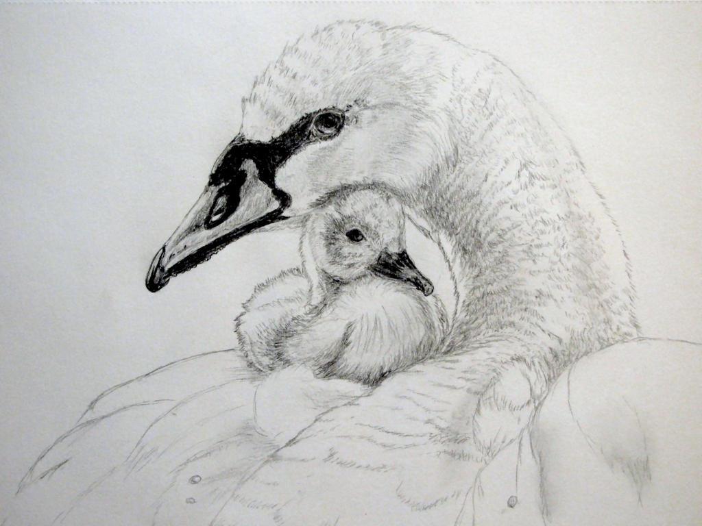 Swans by chrisravensar