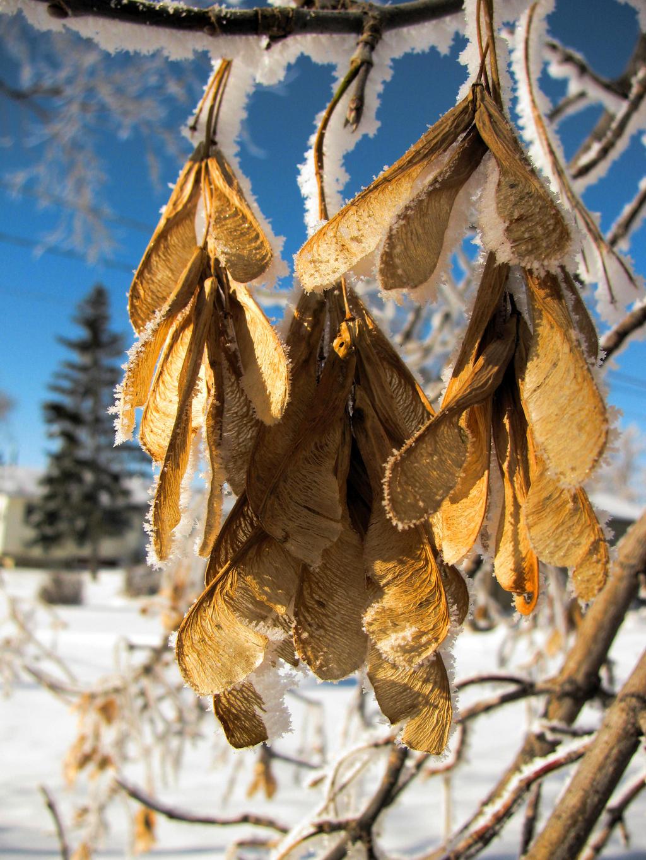 frost 5 by chrisravensar