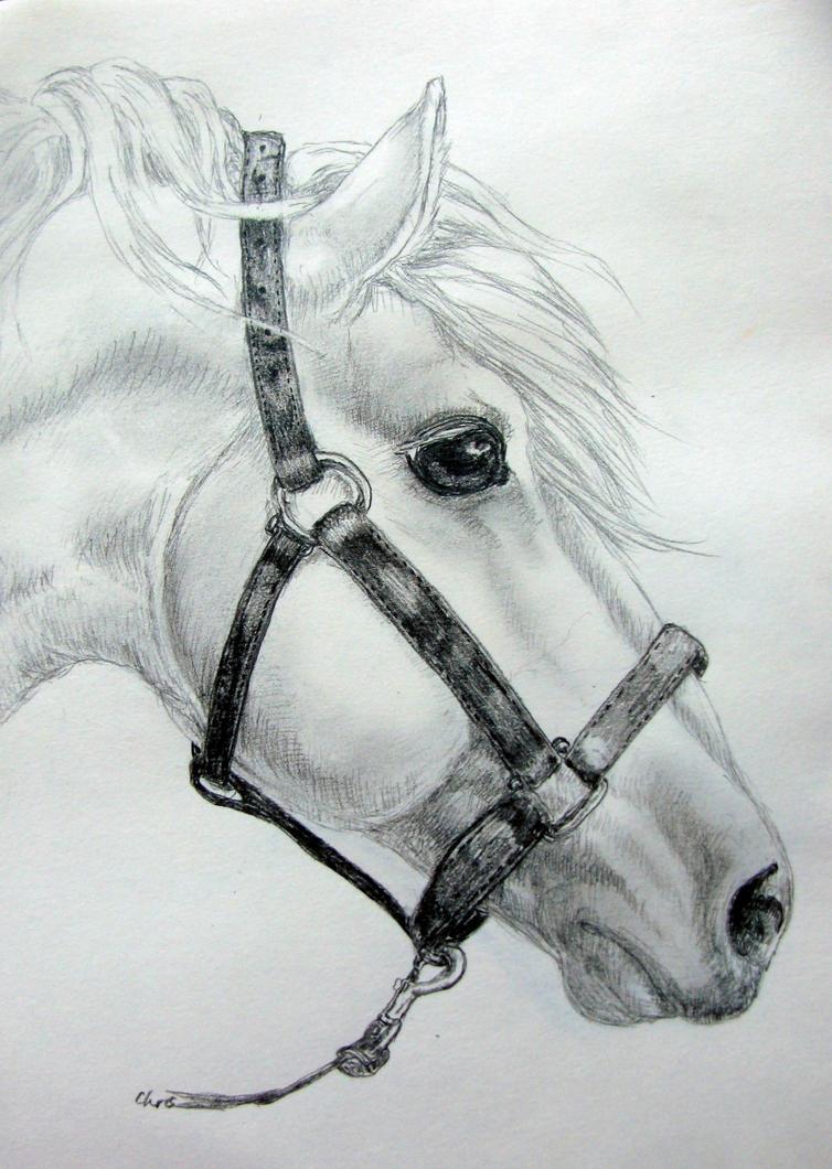 White horse by chrisravensar