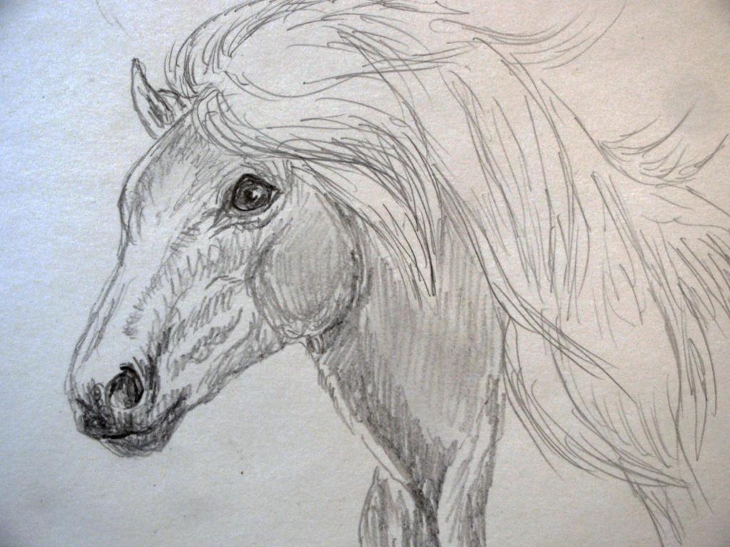 pony by chrisravensar