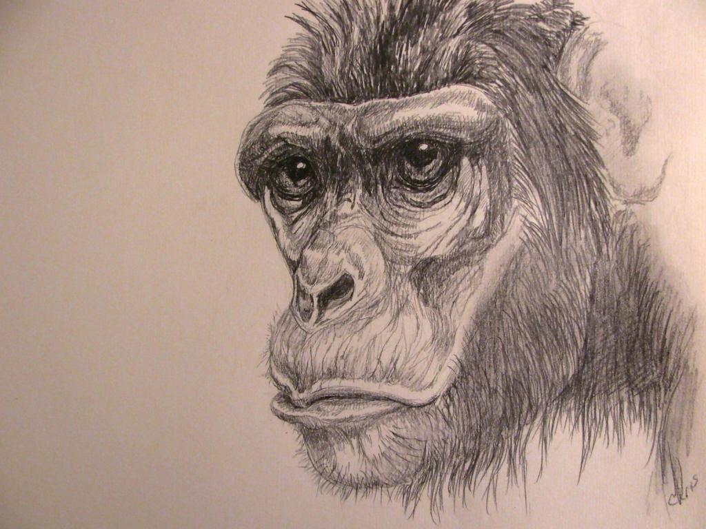 The thinking ape by chrisravensar