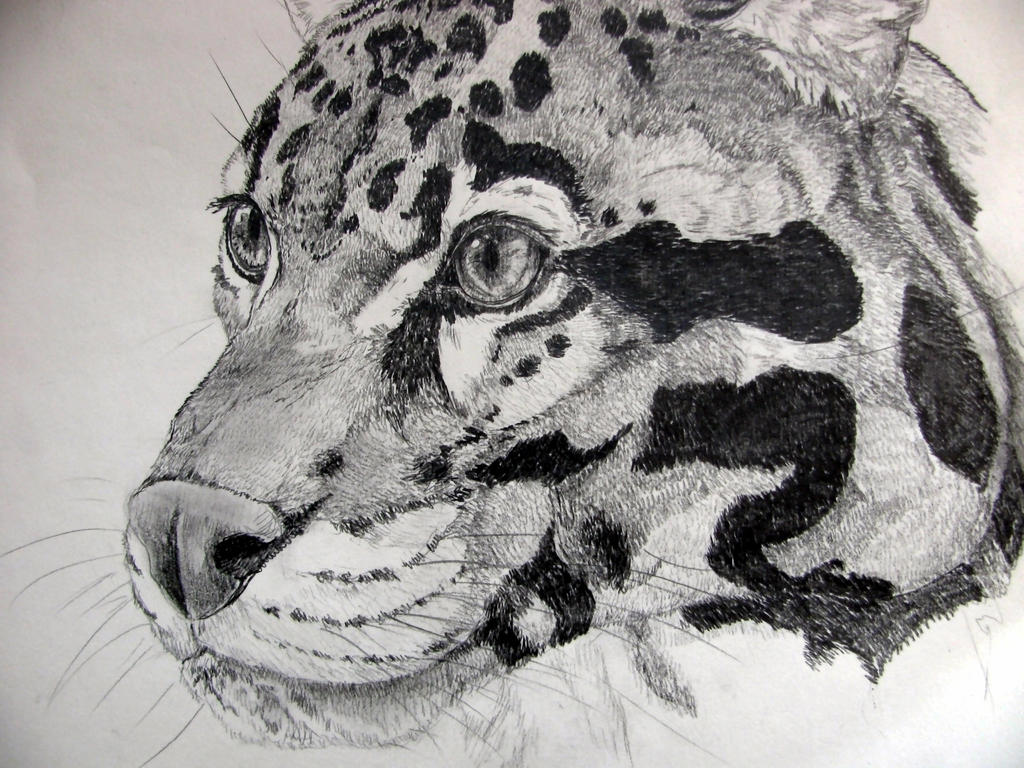Ghost leopard by chrisravensar