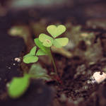 green by ThisFairyTale