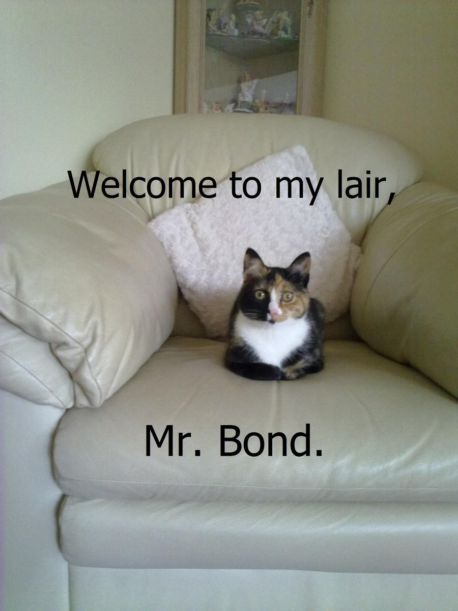 cat bond Learn how ofi global's catastrophe bond strategy invests in us & global cat bond insurance linked securities read more about our investment approach.