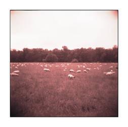 The Sheep and the Holga - No.3 by Zendar