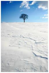 tree in white sand by Zendar
