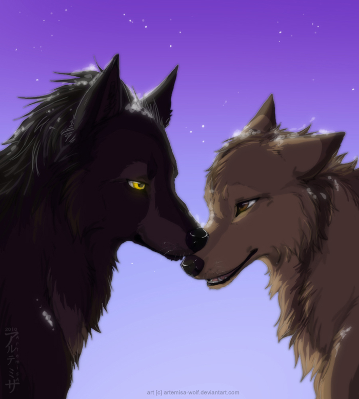 How to Draw Wolf Love, Wolf Love, Step by Step, forest ...  Two Wolves In Love Anime