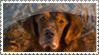 Fluke stamp by ArtemisA-wolf
