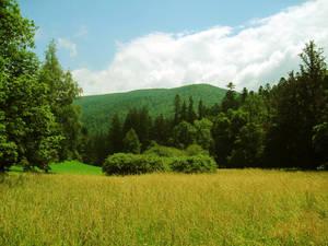 sunshine green