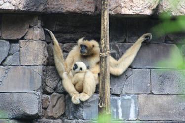 Momma and Baby Monkey