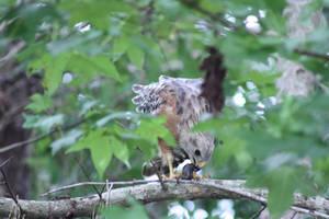 Hawk Feasting on a Fish
