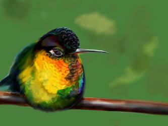 Hummingbird3 by ceredwyn