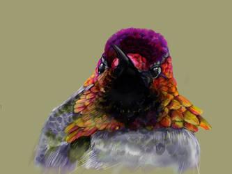 Hummingbird #7 by ceredwyn