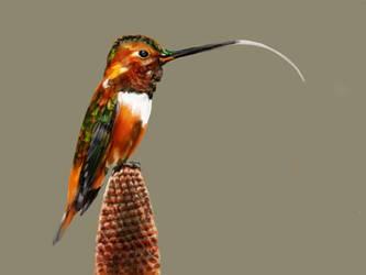 Hummingbird #15 by ceredwyn