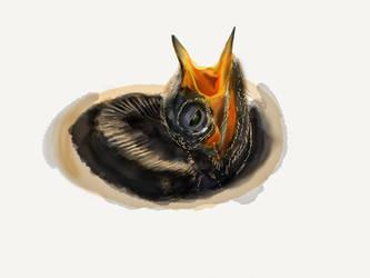 Hummingbird 9 by ceredwyn