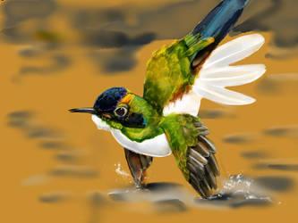 Hummingbird 10 by ceredwyn
