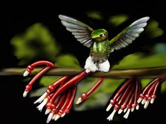 Hummingbird 11 by ceredwyn