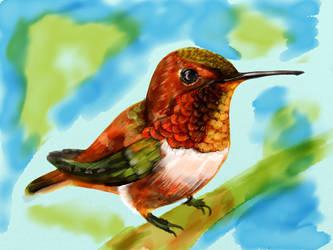 Hummingbird 12 by ceredwyn