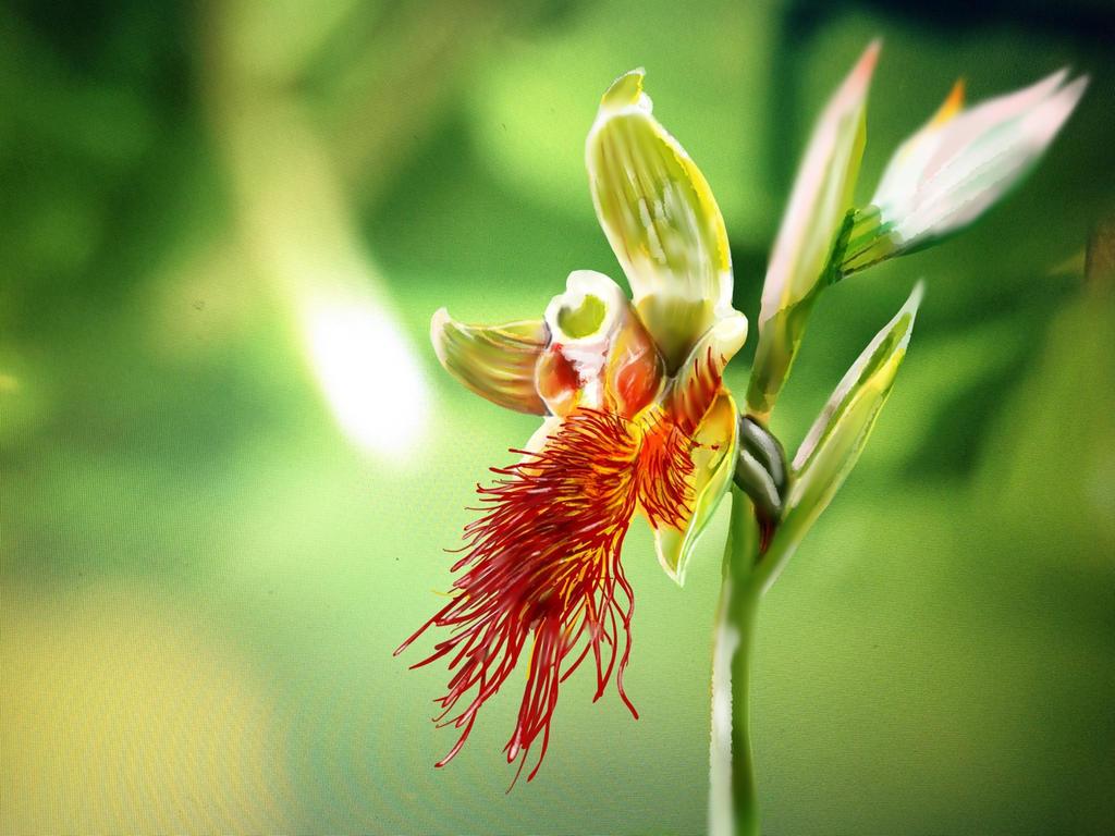 Common Beard-orchid by ceredwyn