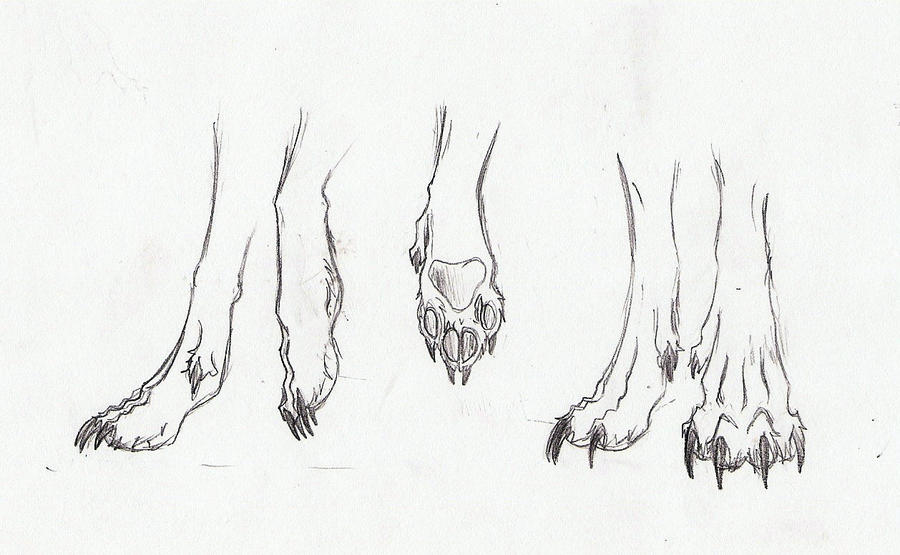 Wolf Paws by LuDeaux-Wolf